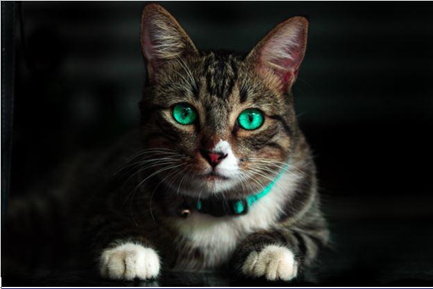 Костюм котенка для мальчика